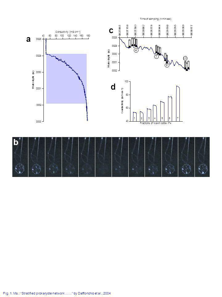 Fig. 1. Ms.: Stratified prokaryote network …… by Daffonchio et al., 2004 b a Conductivity [mS cm -1 ] 3328 3329 3330 3331 3332 3333 Water depth (m) 40