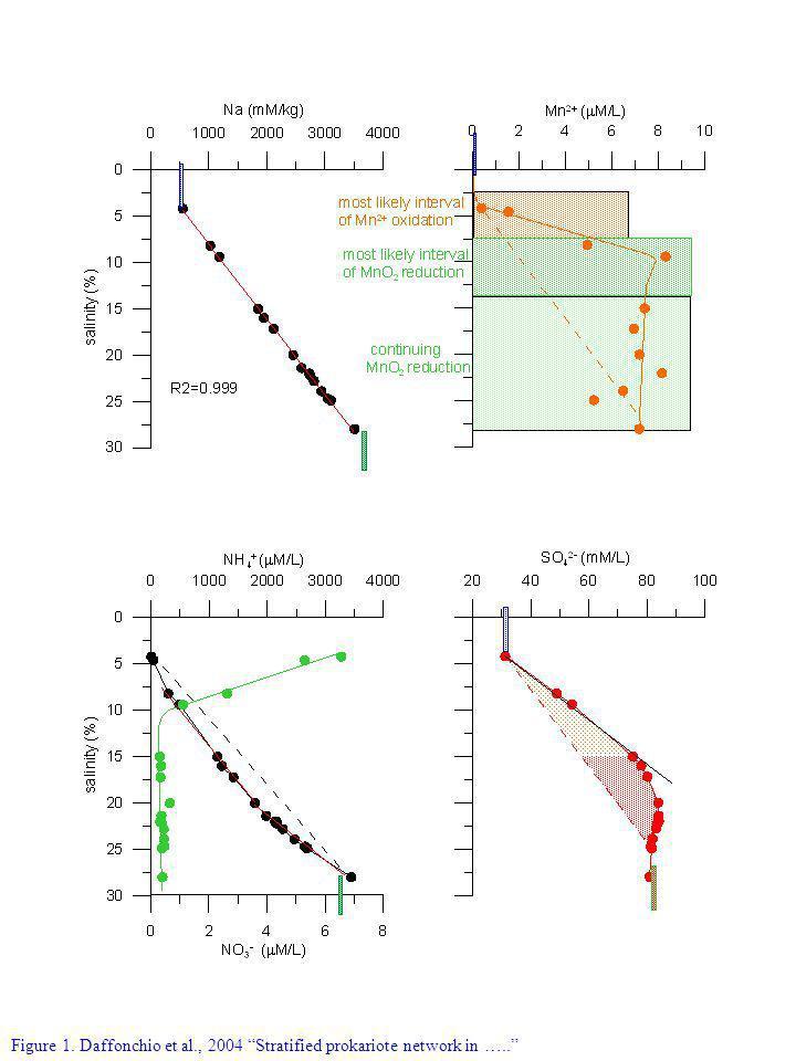 Figure 1. Daffonchio et al., 2004 Stratified prokariote network in …..