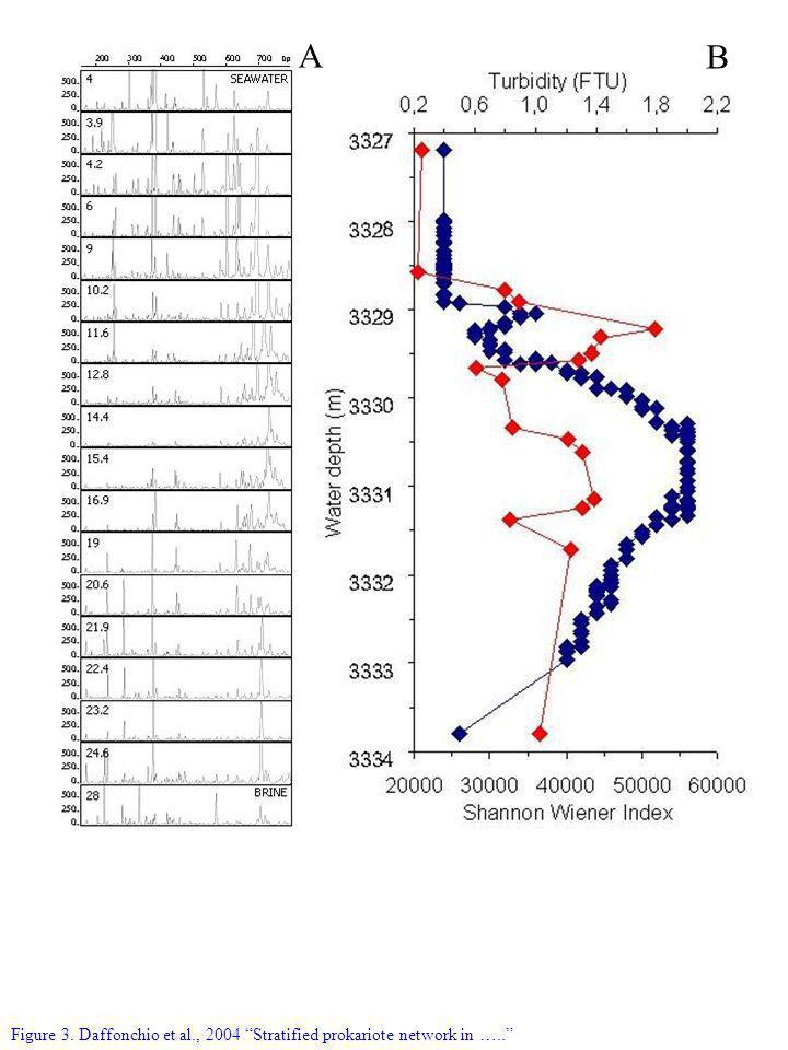 Figure 3. Daffonchio et al., 2004 Stratified prokariote network in ….. B A