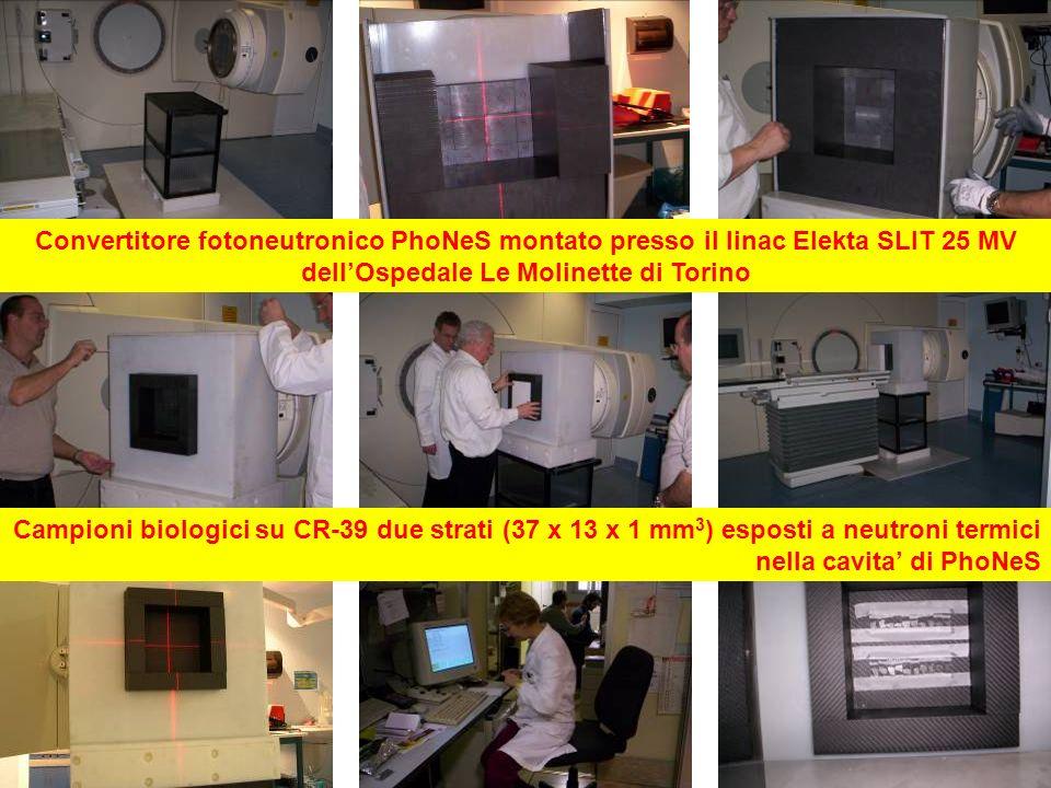 Convertitore fotoneutronico PhoNeS montato presso il linac Elekta SLIT 25 MV dellOspedale Le Molinette di Torino Campioni biologici su CR-39 due strat