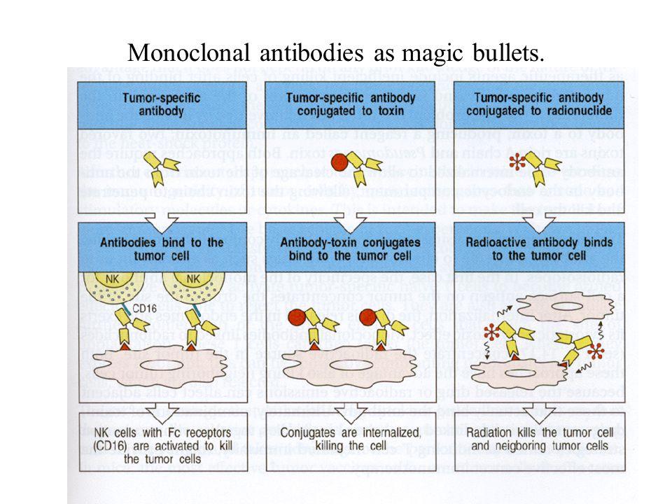 Monoclonal antibodies as magic bullets.