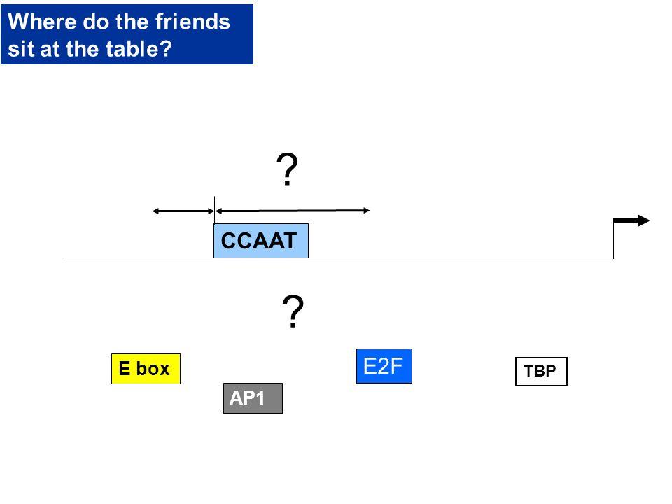 E box CCAAT TBP AP1 E2F ? ? Where do the friends sit at the table?
