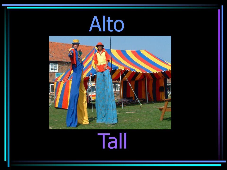 Tall Alto