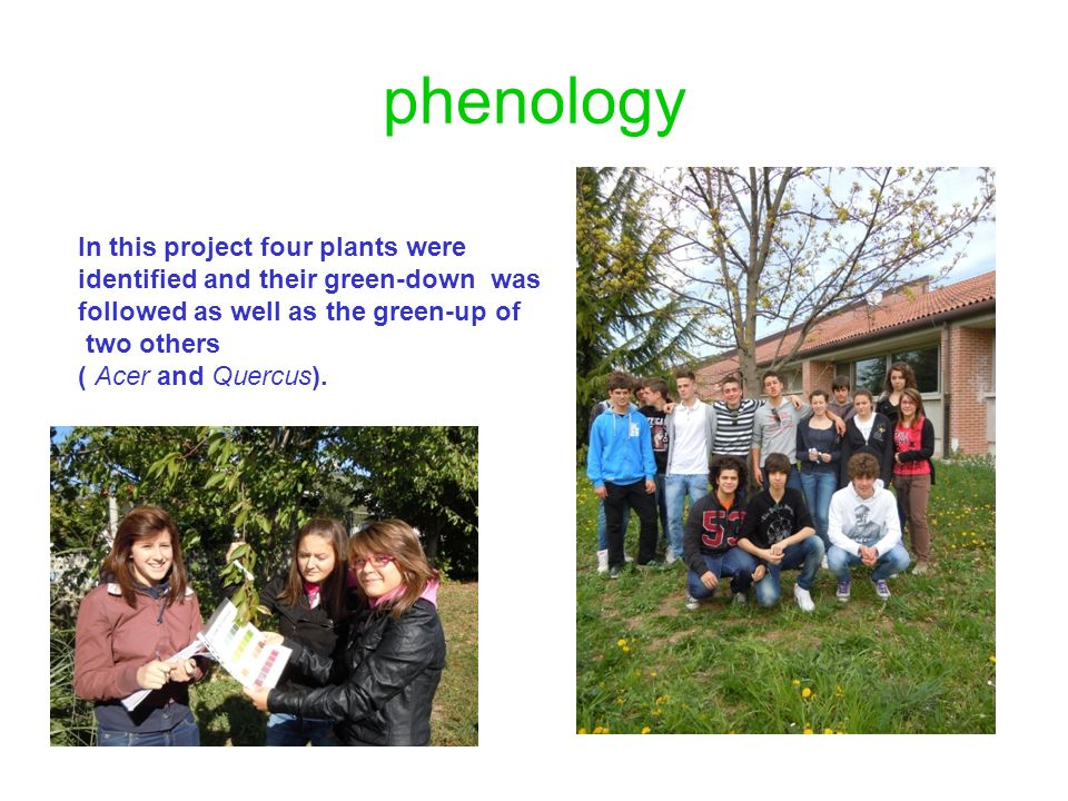 phenology In this project four plants were identified and their green-down was followed as well as the green-up of two others ( Acer and Quercus).