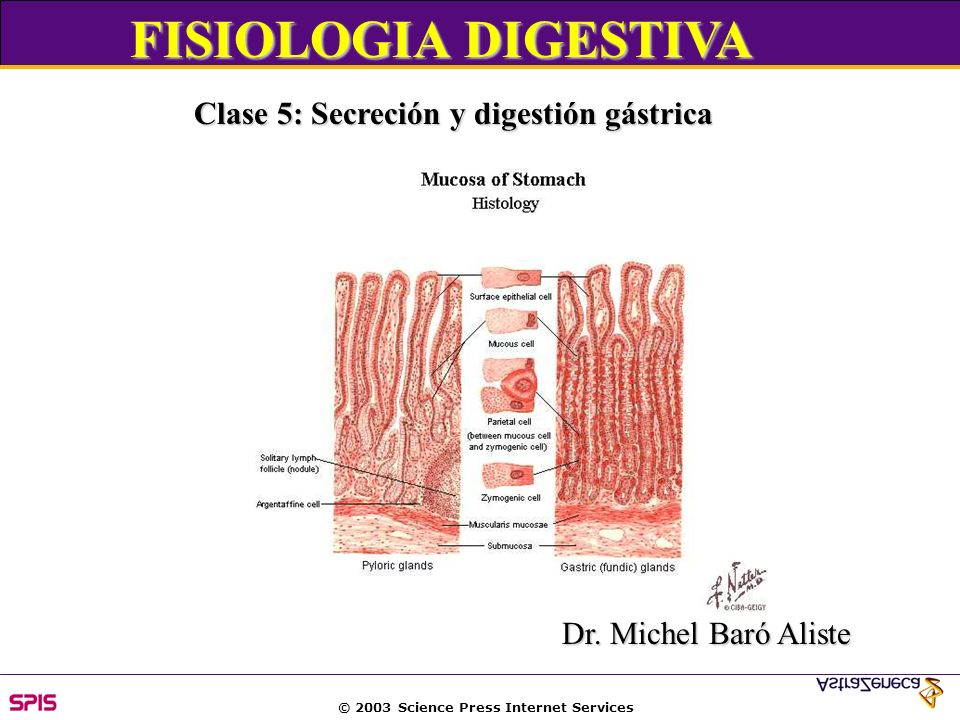 © 2003 Science Press Internet Services Passage of acidic, hyperosmolar gastric chyme into duodenum