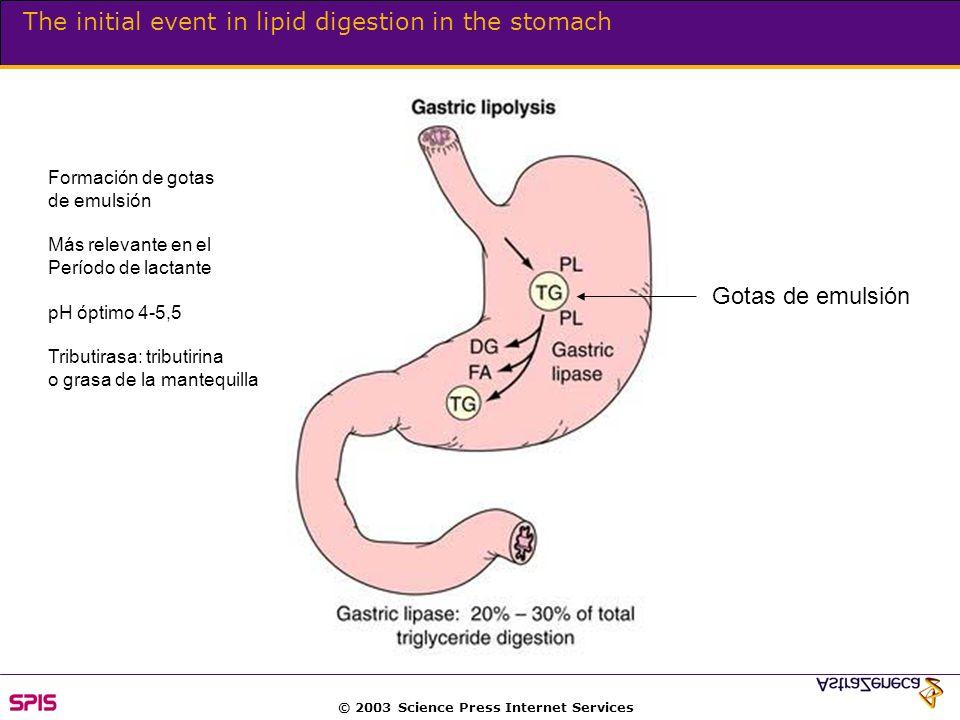 © 2003 Science Press Internet Services The initial event in lipid digestion in the stomach Formación de gotas de emulsión Más relevante en el Período de lactante pH óptimo 4-5,5 Tributirasa: tributirina o grasa de la mantequilla Gotas de emulsión