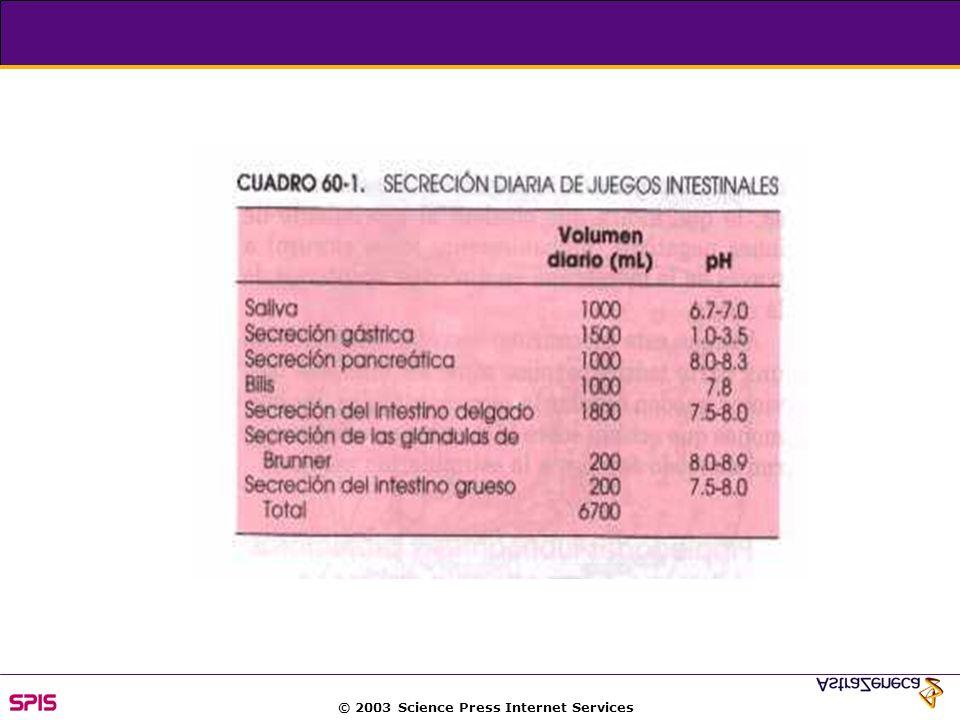 © 2003 Science Press Internet Services Carbohydrate is the major energy source in the diet + sucrosa lactosa %5 boca 30-40% En estómago (Maltosa) 50% Endoglucosidasa