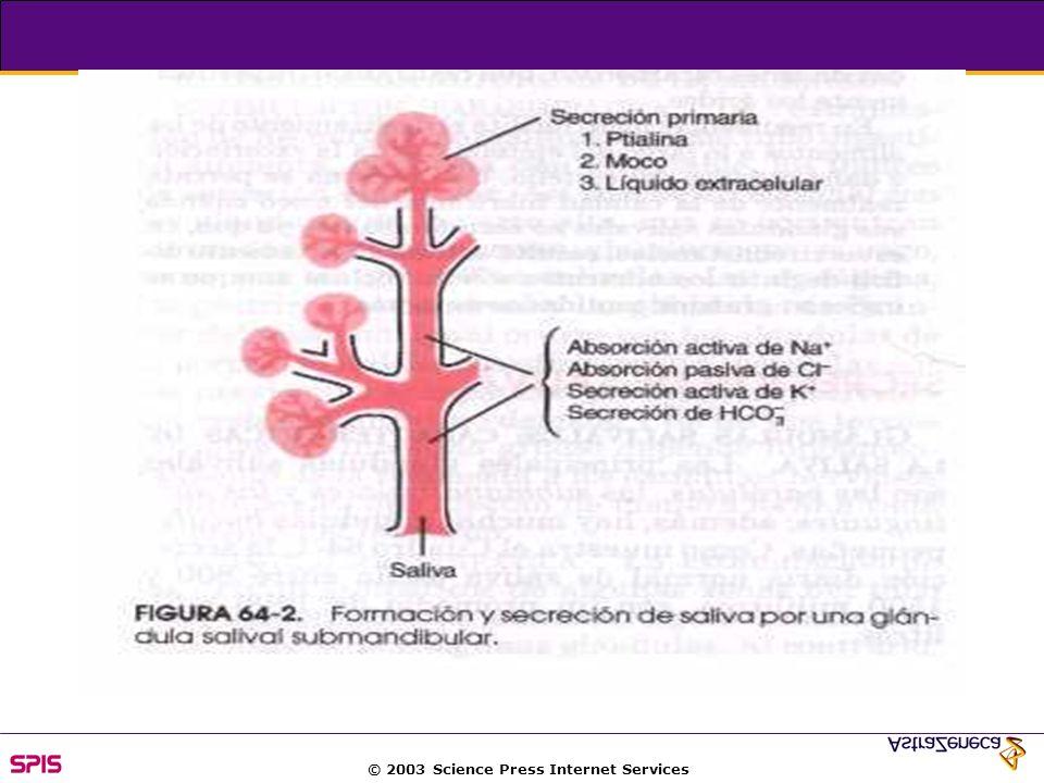 © 2003 Science Press Internet Services The parietal cell