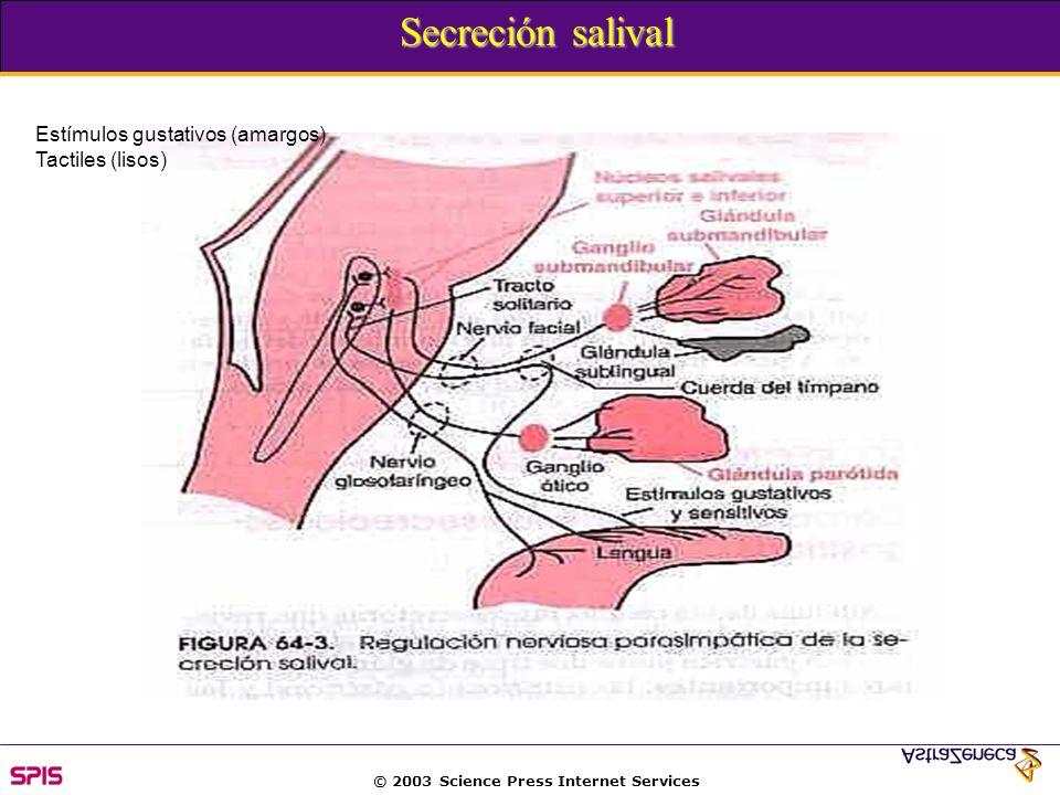 Secreción salival Estímulos gustativos (amargos) Tactiles (lisos)