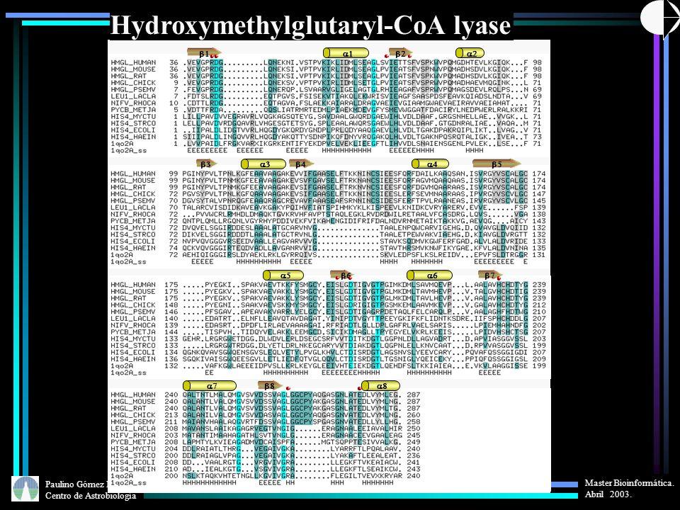 Paulino Gómez Puertas Centro de Astrobiología Master Bioinformática. Abril 2003. Hydroxymethylglutaryl-CoA lyase