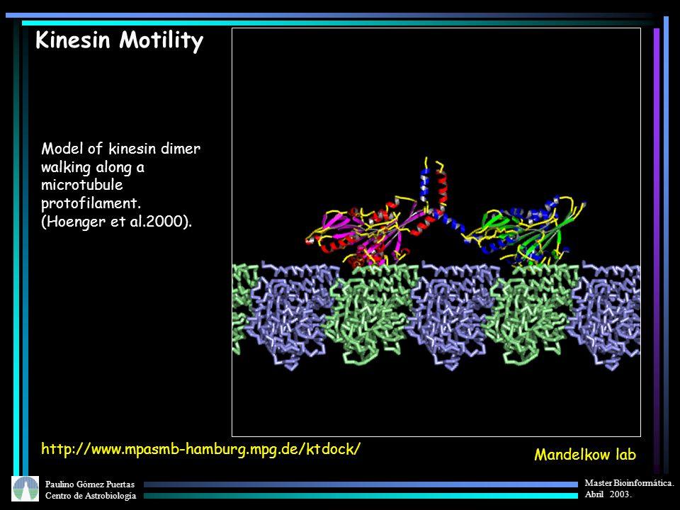 Paulino Gómez Puertas Centro de Astrobiología Master Bioinformática. Abril 2003. Kinesin Motility Model of kinesin dimer walking along a microtubule p