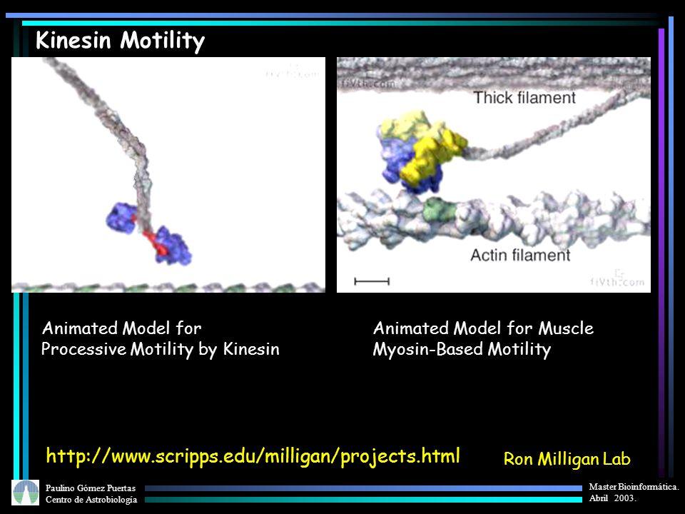 Paulino Gómez Puertas Centro de Astrobiología Master Bioinformática. Abril 2003. Kinesin Motility Ron Milligan Lab http://www.scripps.edu/milligan/pro