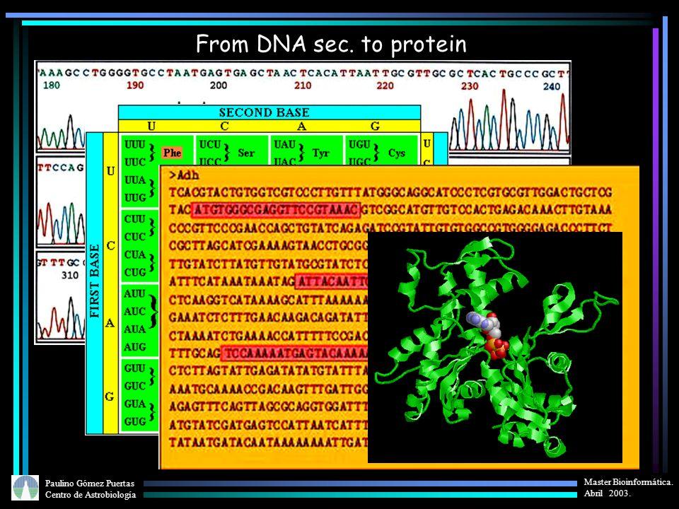 Paulino Gómez Puertas Centro de Astrobiología Master Bioinformática. Abril 2003. From DNA sec. to protein