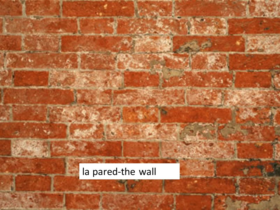 la pared-the wall