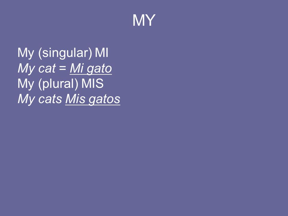 MY My (singular) MI My cat = Mi gato My (plural) MIS My cats Mis gatos