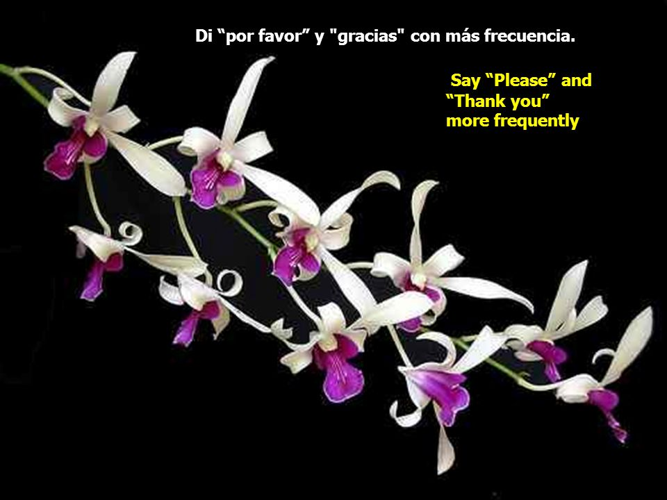 Di por favor y gracias con más frecuencia. Say Please and Thank you more frequently