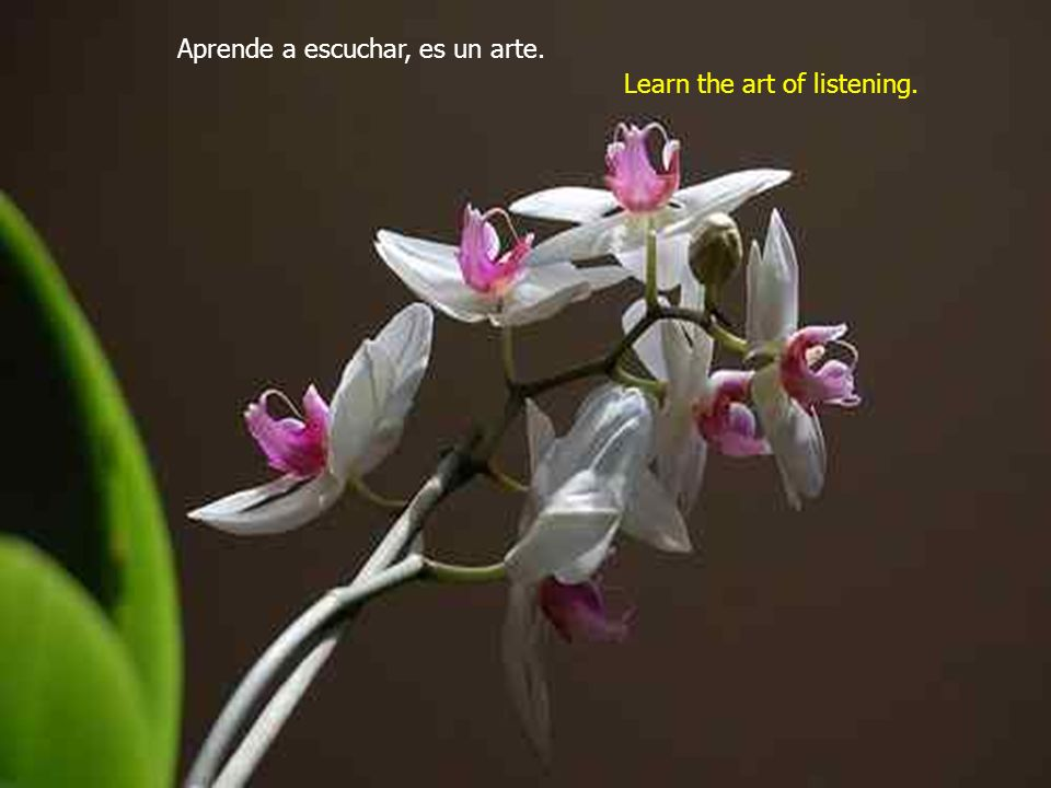 Aprende a escuchar, es un arte. Learn the art of listening.
