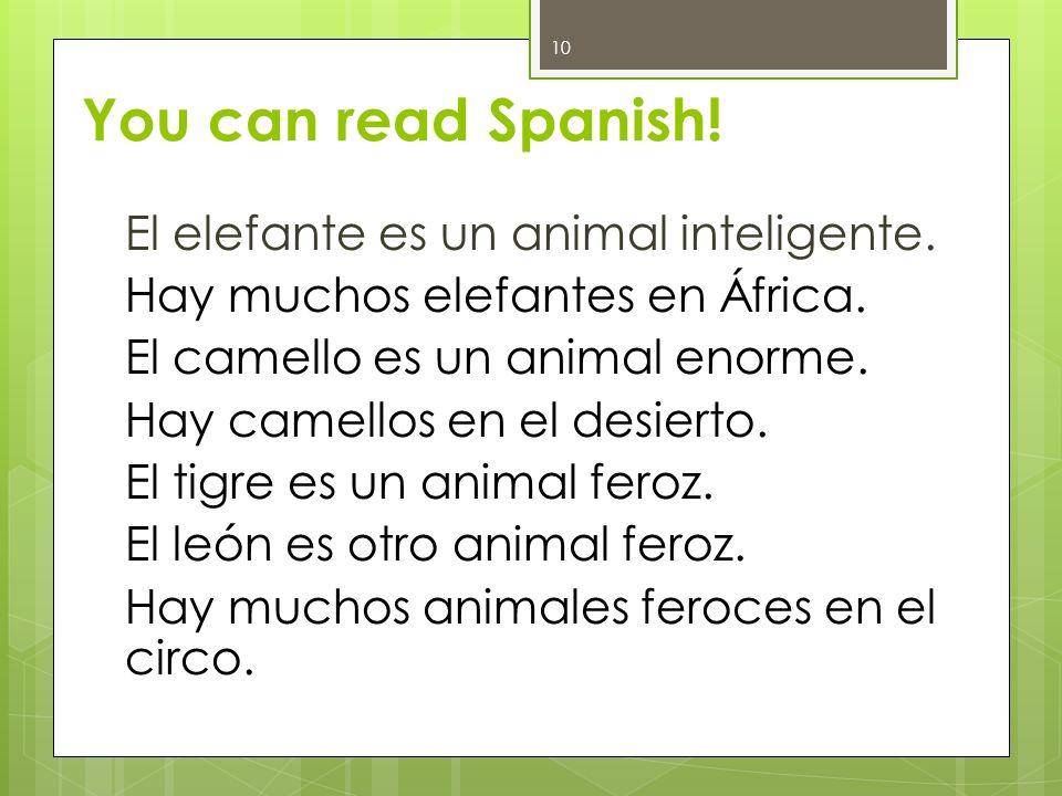 You can read Spanish! El elefante es un animal inteligente. Hay muchos elefantes en África. El camello es un animal enorme. Hay camellos en el desiert
