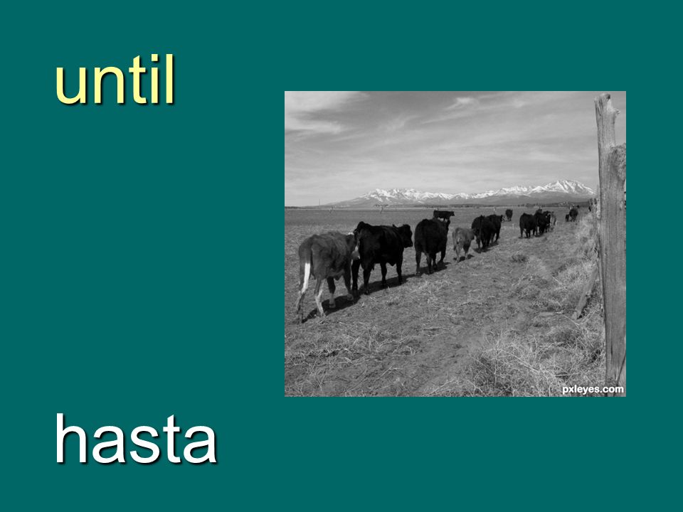 until hasta