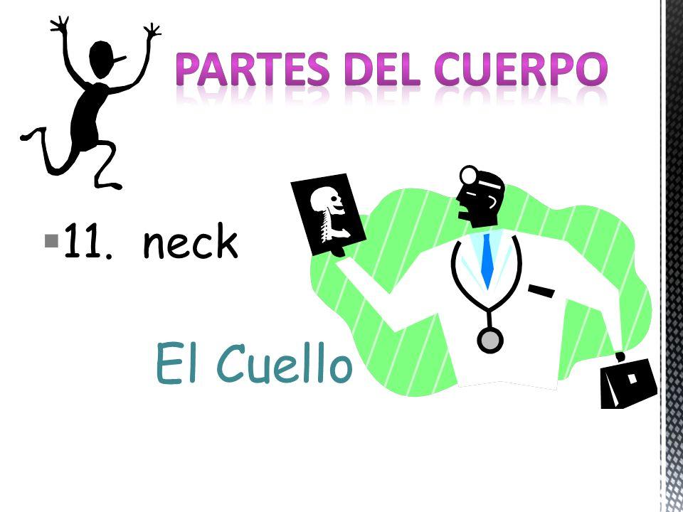 11. neck El Cuello