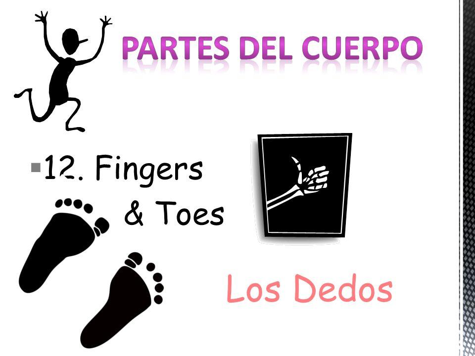 12. Fingers & Toes Los Dedos