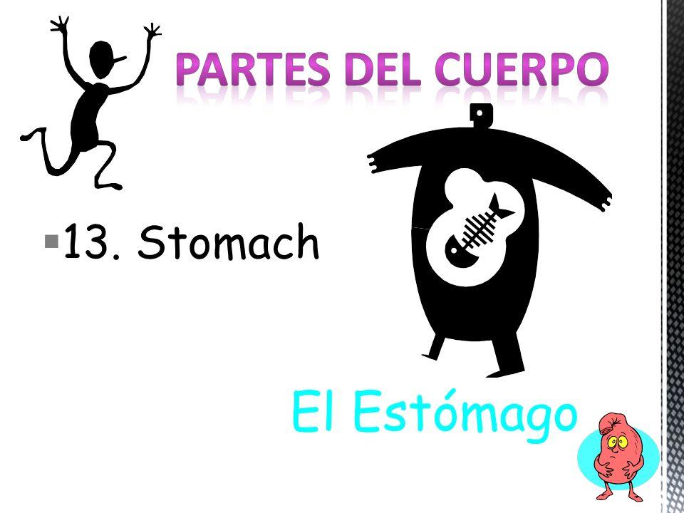 13. Stomach El Estómago