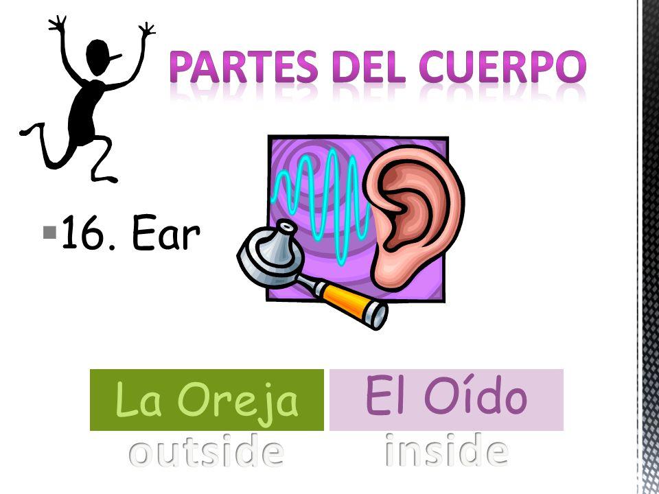 16. Ear La Oreja El Oído