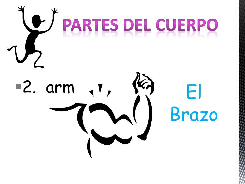 2. arm El Brazo