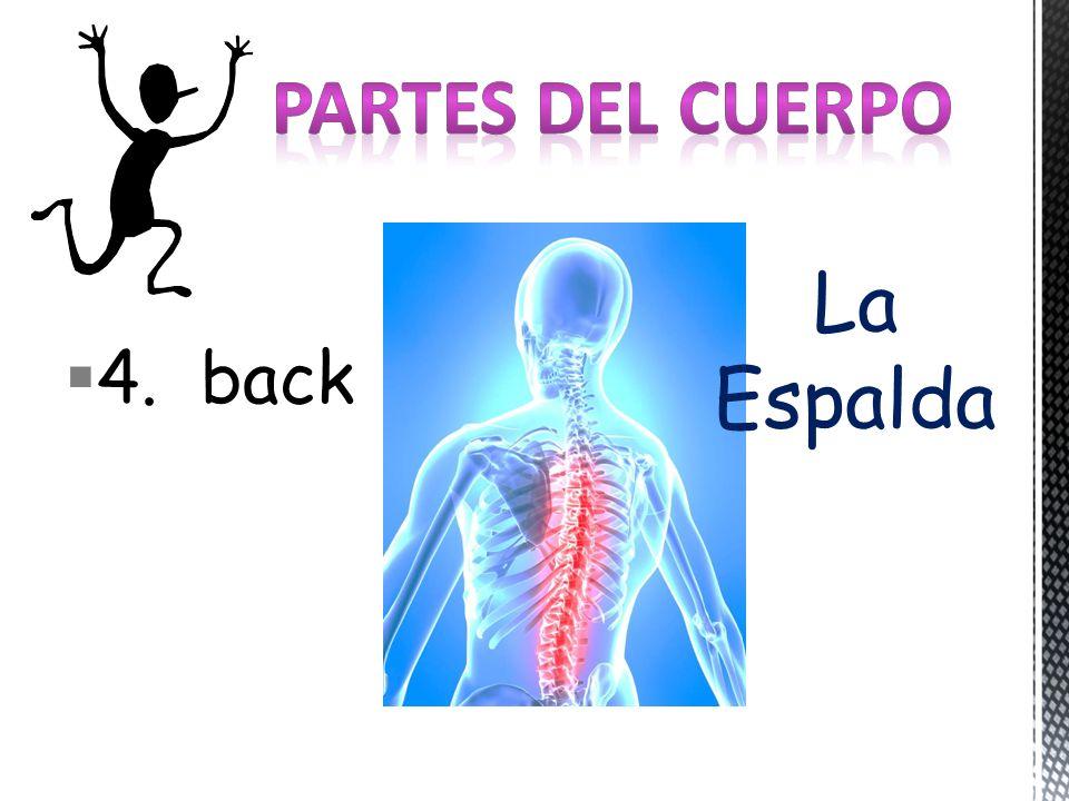 4. back La Espalda