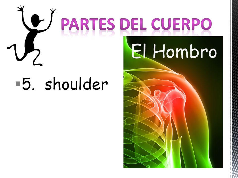 5. shoulder El Hombro