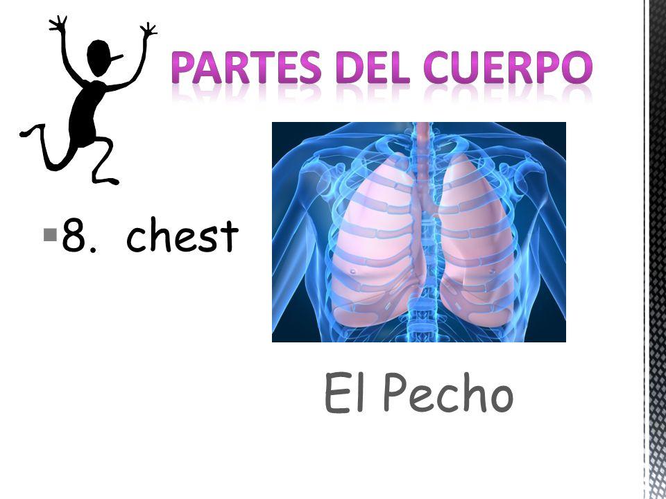 8. chest El Pecho