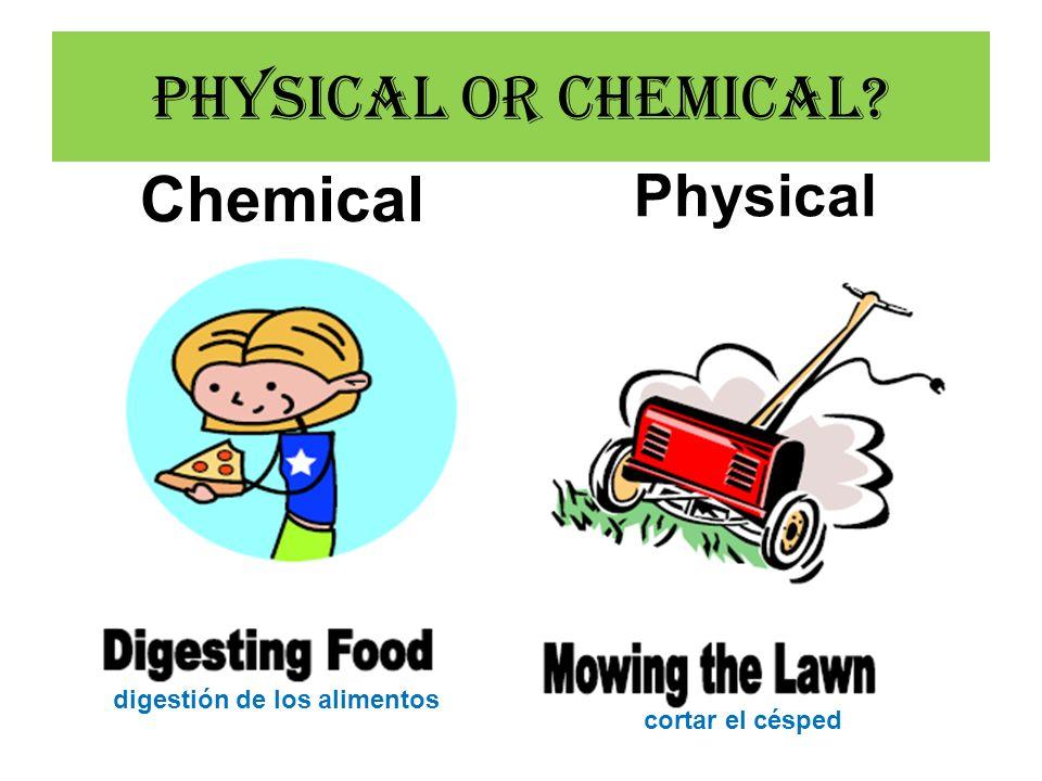 Physical or Chemical? Chemical Physical digestión de los alimentos cortar el césped