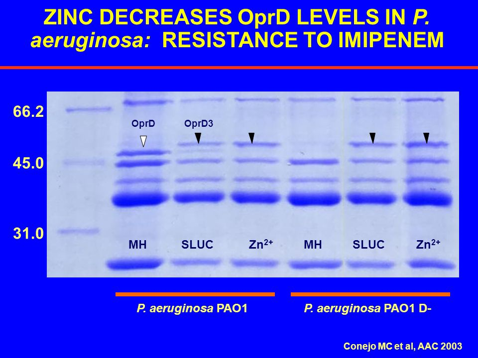 66.2 45.0 31.0 ZINC DECREASES OprD LEVELS IN P. aeruginosa: RESISTANCE TO IMIPENEM OprD3OprD P. aeruginosa PAO1 D-P. aeruginosa PAO1 MHZn 2+ SLUCMHSLU