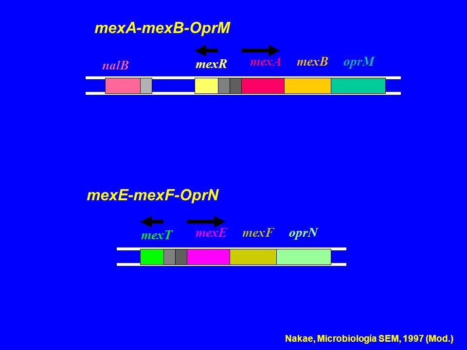 nalB mexR oprMmexBmexA mexA-mexB-OprM mexT oprNmexFmexE mexE-mexF-OprN Nakae, Microbiología SEM, 1997 (Mod.)