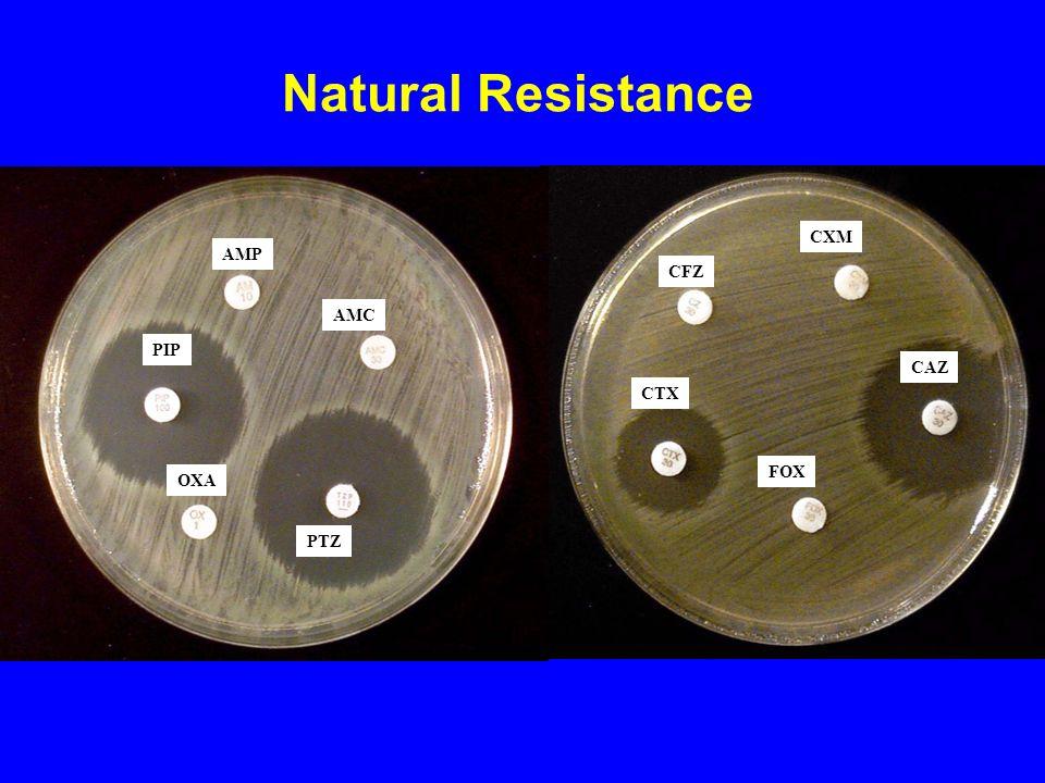 EFFECT OF PAN ON MIC OF LEVOFLOXACIN AGAINST P.