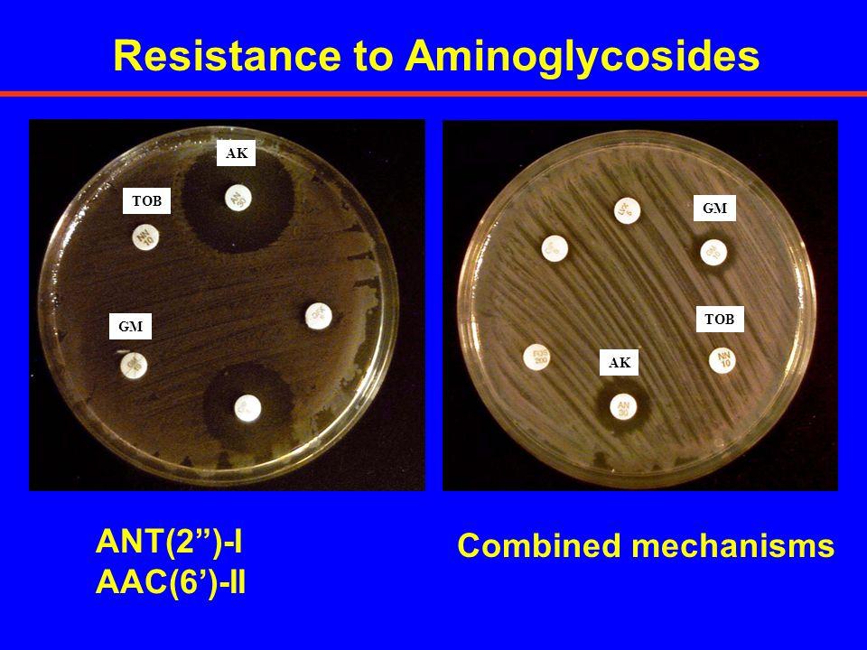 TOB GM AK TOB GM ANT(2)-I AAC(6)-II Combined mechanisms Resistance to Aminoglycosides