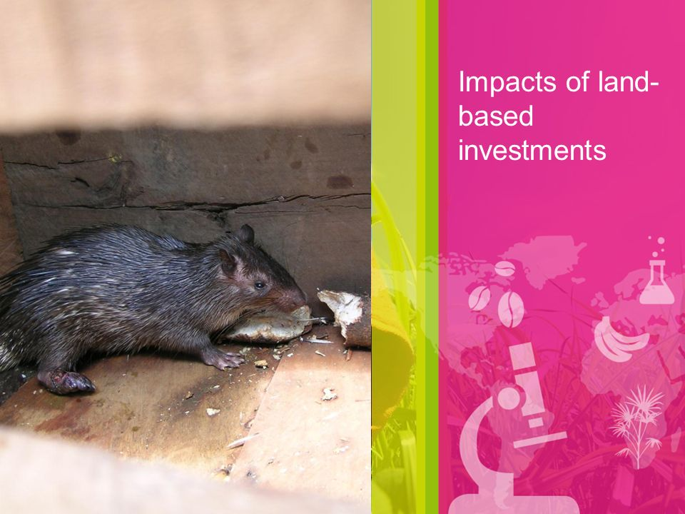 Impacts of land- based investments