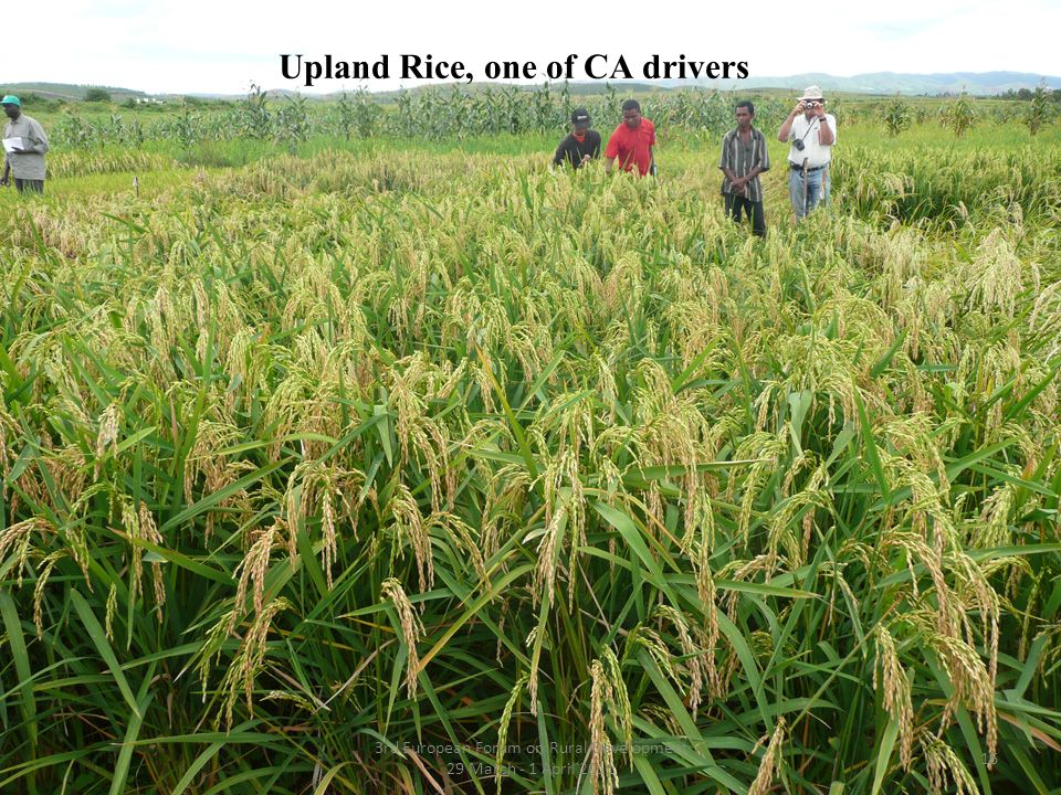 Upland Rice, one of CA drivers 16 3rd European Forum on Rural Development 29 March - 1 April 2011