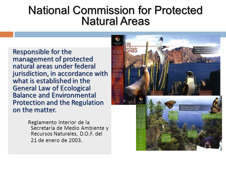 Responsible for the management of protected natural areas under federal jurisdiction, in accordance with what is established in the General Law of Ecological Balance and Environmental Protection and the Regulation on the matter.