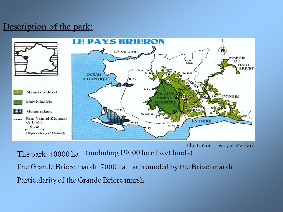Description of the park: The park: 40000 ha (including 19000 ha of wet lands) The Grande Briere marsh: 7000 hasurrounded by the Brivet marsh Particularity of the Grande Briere marsh Illustration: Fleury & Maillard