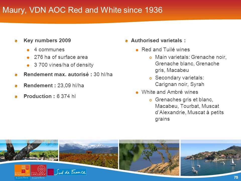 75 Maury, VDN AOC Red and White since 1936 Key numbers 2009 4 communes 276 ha of surface area 3 700 vines/ha of density Rendement max.