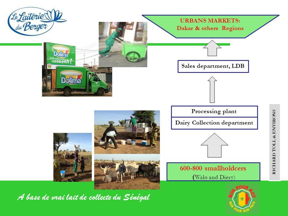 A base de vrai lait de collecte du Sénégal URBANS MARKETS: Dakar & others Regions 600-800 smallholdcers ( Walo and Diery) RICHARD TOLL & ENVIRONS Sale