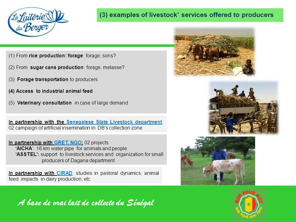 A base de vrai lait de collecte du Sénégal (3) examples of livestock services offered to producers In partnership with GRET, NGO: 02 projects AICHA: 1