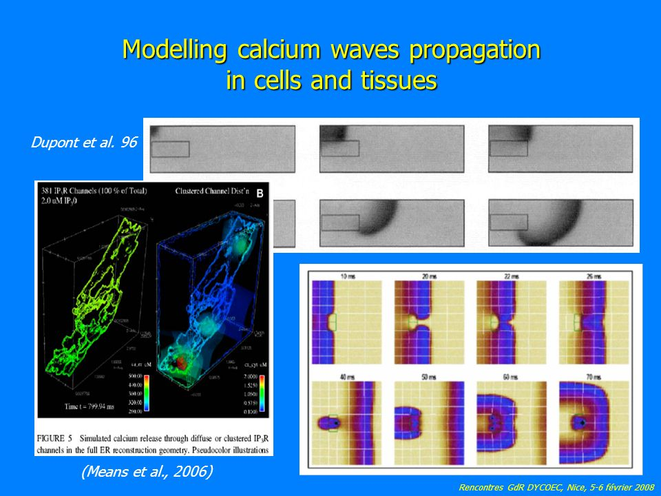 Rencontres GdR DYCOEC, Nice, 5-6 février 2008 Modelling calcium waves propagation in cells and tissues Dupont et al.
