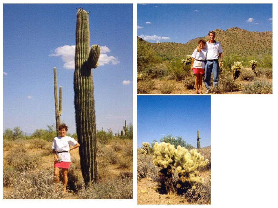 désert de Sonora