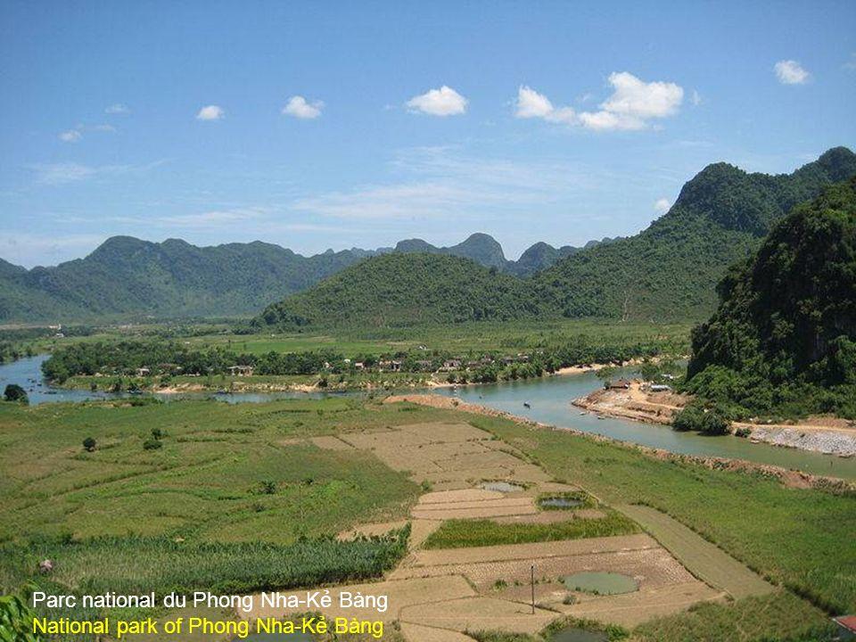 Plantation de café le Viêt Nam est le 2 ème producteur du Monde Coffee plantation.