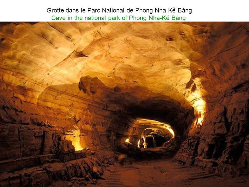 La grotte de Tiên Sơn dans le parc national de Phong Nha-K Bàng Cave of Tiên Sơn in the national park of Phong Nha-K Bàng