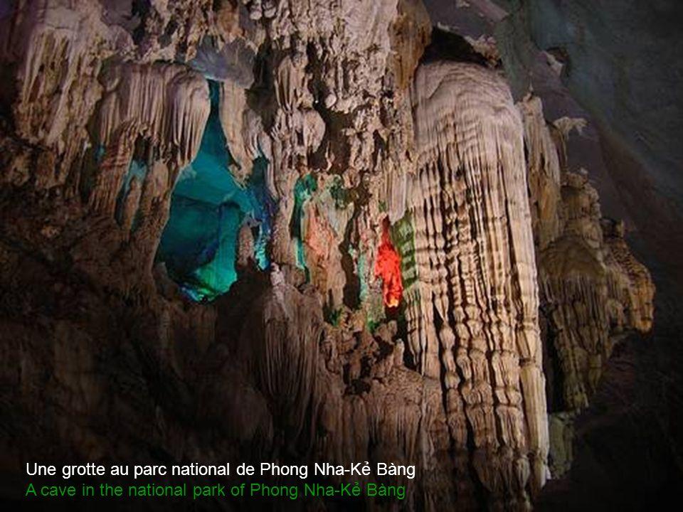 Grotte dans le Parc National de Phong Nha-K Bàng Cave in the national park of Phong Nha-K Bàng