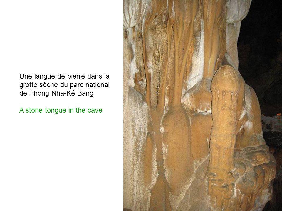 Les stalactites de la grotte sèche du parc national de Phong Nha-K Bàng The stalactites of the dry cave of the national park Phong Nha-K Bàng