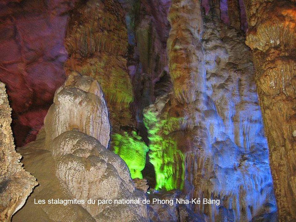 Une langue de pierre dans la grotte sèche du parc national de Phong Nha-K Bàng A stone tongue in the cave